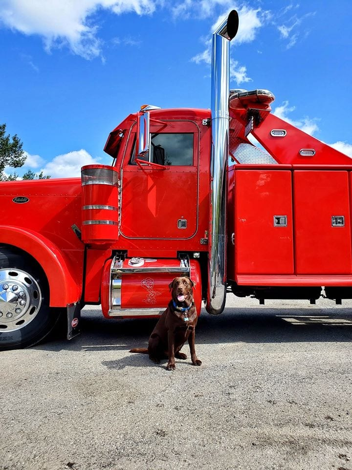 photo of dog sitting in front of red big rig cab