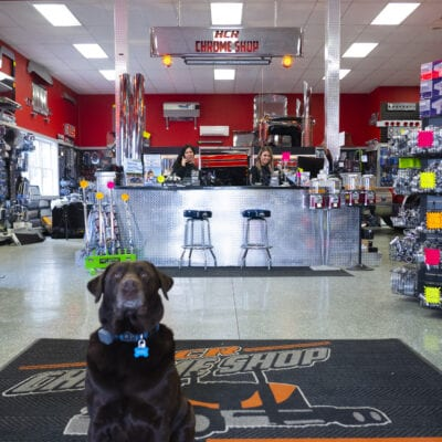 photo of dog in hcr chrome shop store
